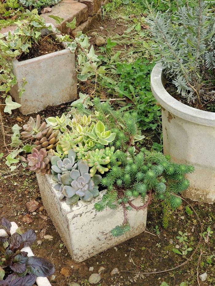 お施主様訪問|ママンのお家|カフェオレママンの家|多肉植物